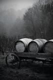 BW Oregon Wine Country II Reproduction photographique Premium par Erin Berzel