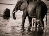 Elephant & Baby Reproduction photographique par Beth Wold