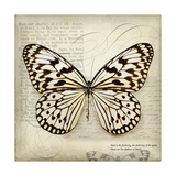 Butterflies Script III Premium Giclee Print by Amy Melious