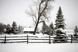 Winter I Fotografisk tryk af Beth Wold