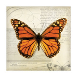 Butterflies Script II Premium Giclee Print by Amy Melious