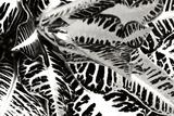 Croton II Valokuvavedos tekijänä Alan Hausenflock