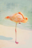 Resting Flamingo Photographic Print by Roberta Murray