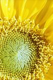 Natur Fotografie-Druck von Ono Ludwig