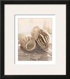 Seashore Achatina Prints by Donna Geissler