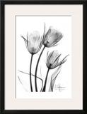 Tulip Arrangement in Black and White Posters by Albert Koetsier