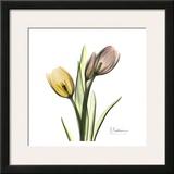 Tulip Bouquet Posters by Albert Koetsier