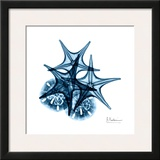 Starfish and Sand Dollar in Blue Art by Albert Koetsier