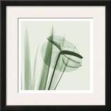 Flamingo Plant in Green Poster by Albert Koetsier