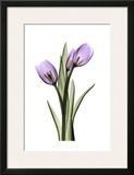 Purple Tulips II Print by Albert Koetsier