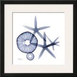 Sea Life in Blue II Prints by Albert Koetsier