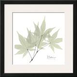 Japanese Maple in Green Posters by Albert Koetsier