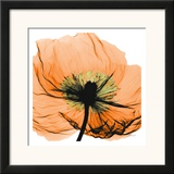 Poppy Orange Poster by Albert Koetsier