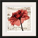 Red Rose Love Prints by Albert Koetsier