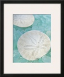 Seaglass 3 Prints by Alan Blaustein