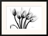 Early Tulips N Black and White Prints by Albert Koetsier