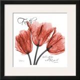 Royal Red Tulip, Faith Prints by Albert Koetsier
