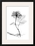 Rose in Full Bloom in Black and White Print by Albert Koetsier