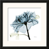 Blue Rose 2 Prints by Albert Koetsier