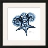 Starfish in Blue Posters by Albert Koetsier