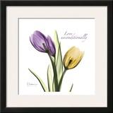 Tulips Love Unconditionally Prints by Albert Koetsier