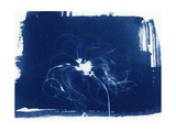 Clematis Seed Head, 2013 Impressão giclée por Elspeth Ross