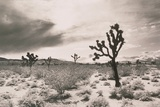 Cacti in Desert Photographic Print by Graeme Harris