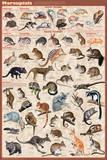 Marsupials Kunstdruck