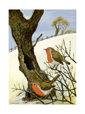 A Pair of Robins Giclée-tryk af Margaret Loxton