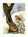 A Pair of Robins Giclée-vedos tekijänä Margaret Loxton