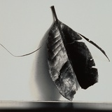 Damaged Leaf Photographic Print by Graeme Harris