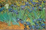 Garden of Irises (Les Irises, Saint-Remy), c. 1889 Stretched Canvas Print by Vincent van Gogh