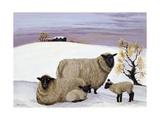 Sheep in Winter Giclée-vedos tekijänä Margaret Loxton