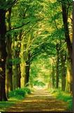 Skogssti Trykk på strukket lerret av Hein Van Den Heuvel