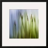 Moss Framed Giclee Print by Ursula Abresch