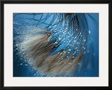 Waterdance Framed Giclee Print by Ursula Abresch