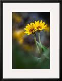 For Maria Impressão fotográfica emoldurada por Ursula Abresch