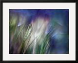 Needles Framed Giclee Print by Ursula Abresch