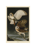 Barn Owl Giclée-tryk af John James Audubon
