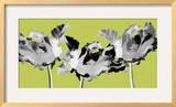 Limelight I Impressão giclée emoldurada por Linda Wood