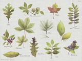 New Leaves I Poster von Sandra Jacobs