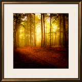 The Smell of Autumn Framed Photographic Print by Philippe Sainte-Laudy