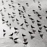 Escher's Seagulls Art by Michael Kahn