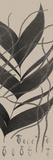 Plantes Exotique II Impressão giclée por Maria Mendez