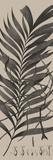 Plantes Exotique I Impressão giclée por Maria Mendez