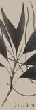 Plantes Exotique IV Impressão giclée por Maria Mendez