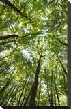 Woods, Shenandoah National Park Stretched Canvas Print by Michael Hudson