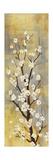 Blossoms II Poster por Sloane Addison