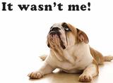 It wasn't me - Dog Plåtskylt