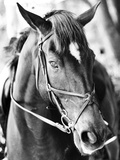 Derby I Photographic Print by Susan Bryant